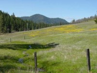 The Wild Grasslands of Trinity County